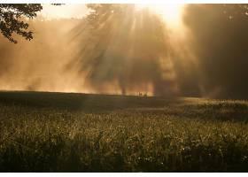 阳光,自然,草,雾,壁纸,图片