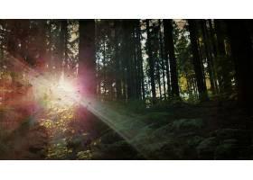 阳光,自然,蕨,森林,树,壁纸,图片
