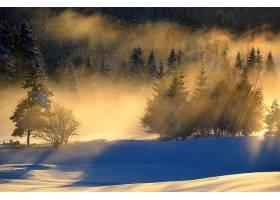 阳光,自然,雪,森林,风景,冬天的,壁纸,图片