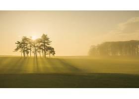 阳光,自然,雾,领域,壁纸,图片