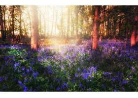 地球,花,花,自然,阳光,野风信子,蓝色,花,壁纸,图片
