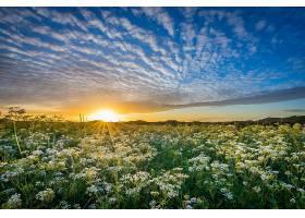 阳光,草地,自然,花,日出,云,天空,壁纸,图片