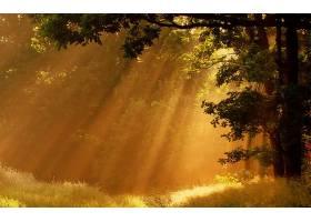 阳光,阳光,阳光,森林,壁纸,图片
