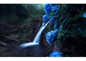 瀑布,瀑布,岩石,绣球花,蓝色,蓝色,花,壁纸,图片