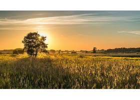 地球,领域,自然,日出,风景,植物,壁纸,图片