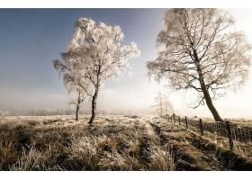 地球,领域,自然,树,冬天的,雾,壁纸,图片