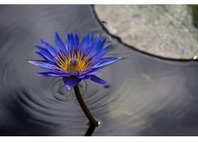水,莉莉,花,自然,花,水,蓝色,花,壁纸,图片