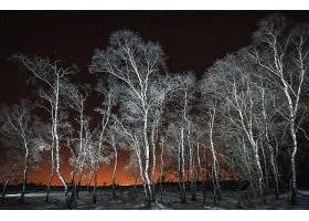 夜晚,自然,树,冬天的,地平线,布满星星的,天空,桦树,壁纸,图片