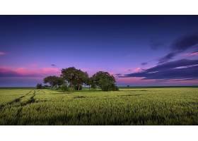 地球,领域,自然,树,地平线,夏天,天空,壁纸,