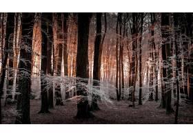 森林,自然,树,冬天的,壁纸,图片