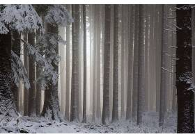 森林,自然,树,冬天的,雾,雪,壁纸,图片