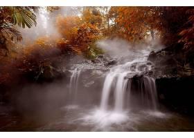 瀑布,瀑布,秋天,森林,树,叶子,壁纸,图片