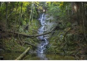 瀑布,瀑布,自然,溪流,原木,森林,岩石,壁纸,图片