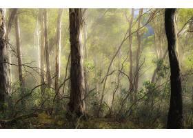 森林,自然,树,壁纸,(1)图片