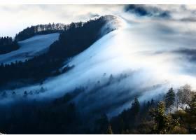 雾,冬天的,风景,树,山,自然,森林,壁纸,图片