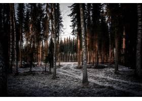 森林,自然,树,壁纸,(10)图片