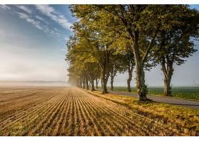 地球,领域,自然,树,路,绿树成荫,壁纸,图片