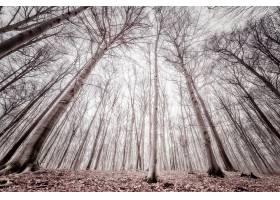 森林,自然,树,壁纸,(11)图片