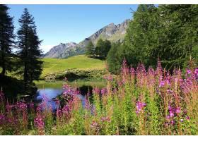 地球,风景,自然,花,湖,山,水,树,壁纸,图片
