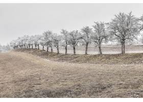 地球,领域,自然,绿树成荫,树,冬天的,壁纸,图片