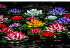 水,莉莉,花,自然,花,红色,花,白色,花,粉红色,花,黄色,花,壁纸,图片