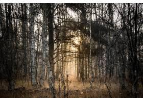森林,自然,树,壁纸,(8)图片