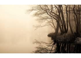 雾,壁纸,图片