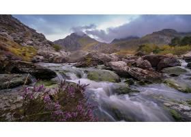 溪流,自然,岩石,紫色,花,壁纸,图片