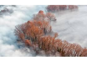 雾,天线,自然,树,秋天,壁纸,图片