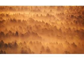 雾,天线,自然,森林,壁纸,图片