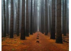 森林,自然,树,小路,雾,壁纸,图片