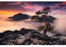 雾,山,树,日落,壁纸,图片