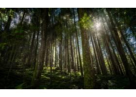 森林,自然,树,快活的,壁纸,图片
