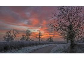 日落,冬天的,路,雪,树,壁纸,图片