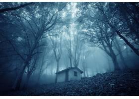 雾,建筑物,树,壁纸,图片