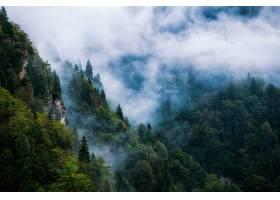 雾,森林,自然,壁纸,(1)图片