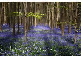 森林,自然,树,花,紫色,花,壁纸,图片