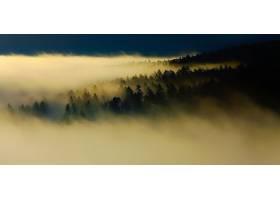 雾,森林,自然,树,壁纸,图片