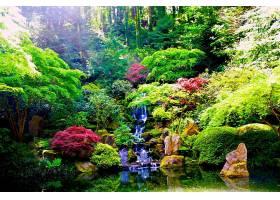 瀑布,瀑布,自然,花园,植物,植物,水,森林,壁纸,图片
