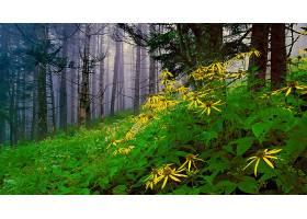森林,自然,树,花,绿色的,雾,黄色,花,壁纸,图片