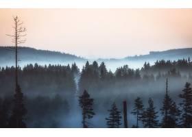 雾,森林,风景,自然,壁纸,图片