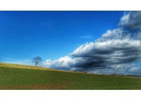 地球,领域,风景,树,云,天空,蓝色,壁纸,图片