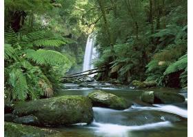 瀑布,瀑布,自然,小溪,植物,森林,石头,绿色的,蕨,壁纸,图片
