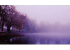 雾,湖,树,紫色,壁纸,图片