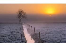 雾,溪流,自然,寂寞的,树,地平线,风景,日出,壁纸,图片