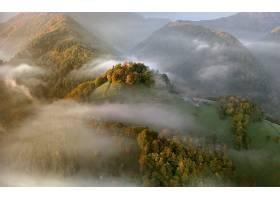 雾,秋天,叶子,山,森林,壁纸,图片