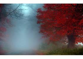 雾,秋天,叶子,树,森林,路,壁纸,图片