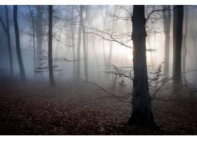 雾,秋天,森林,黎明,自然,壁纸,图片