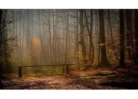 森林,自然,树,阳光,秋天,壁纸,图片