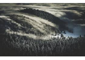 雾,自然,冬天的,森林,天线,雪,壁纸,图片